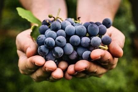 Topel Wines